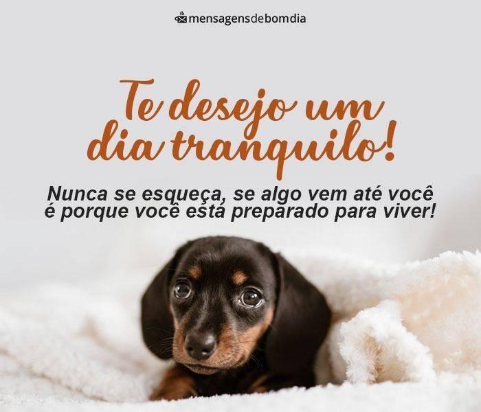 Te Desejo um Dia Tranquilo!