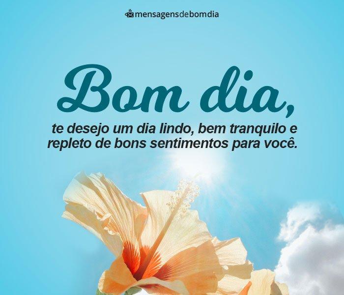 Te Desejo um Dia Lindo e Tranquilo