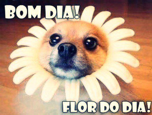 mensagem de bom dia engraçada Cachorro